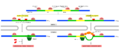 Nonsense-mediated mRNA decay cz.png