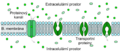 Scheme facilitated diffusion in cell membrane-cz.png