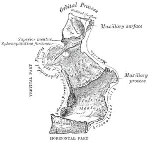 definition Palatinus Palatina Palatinum